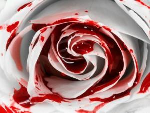 BloodRose-300x225